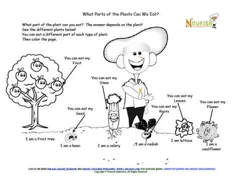 Parts of the plant you can eat coloring page for Different parts of soil