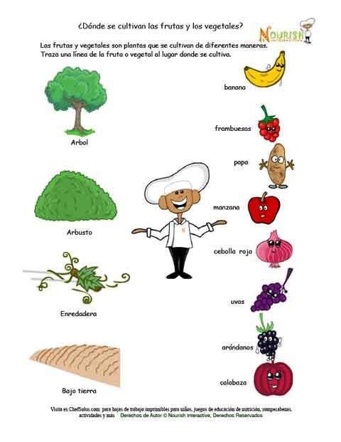 191 D 243 Nde Se Cultivan Las Frutas Y Los Vegetales Hoja De