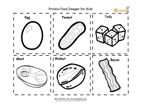 Protein Food Nutrition Flash Cards Cut Out Printable for Kids